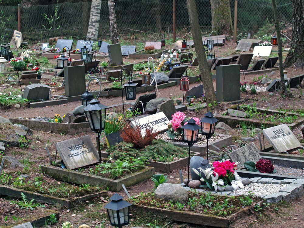 Tierfriedhof für Shih Tzu